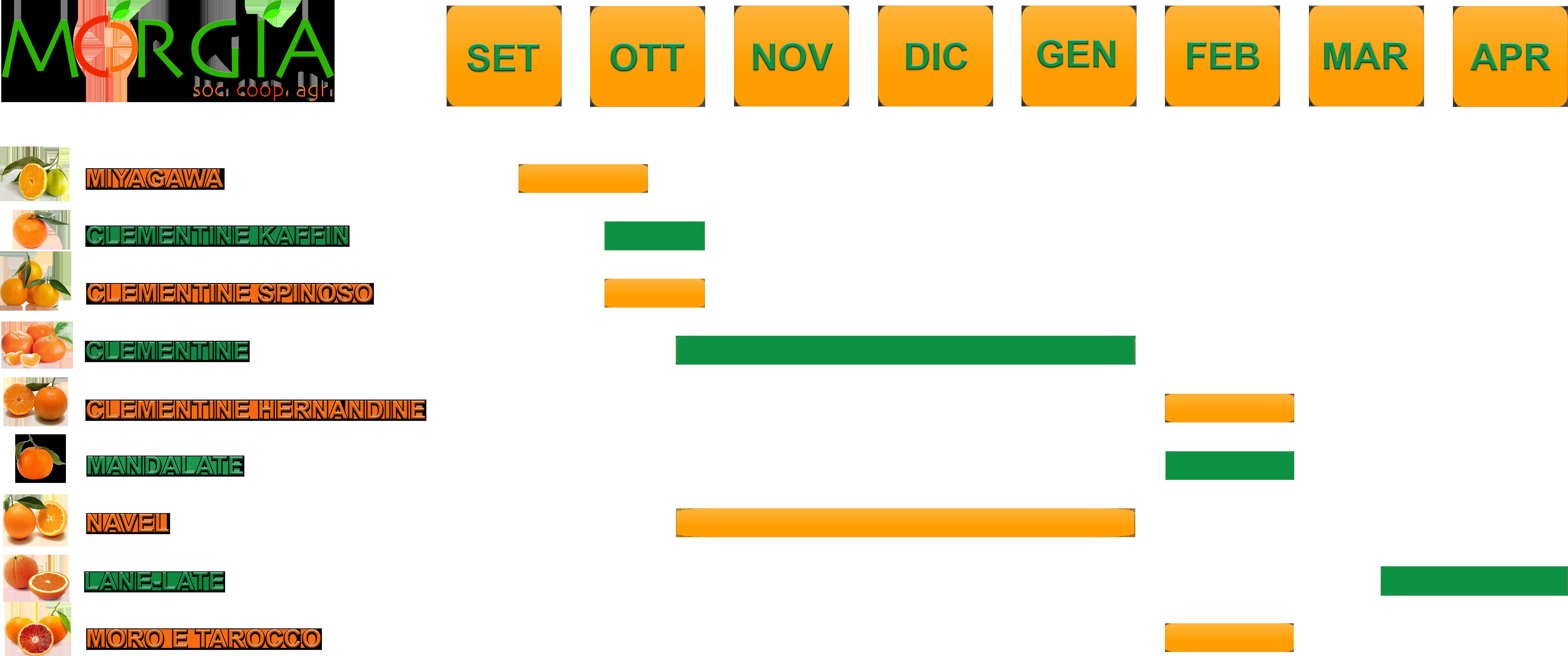 Agrumi morgia for Calendario concimazione agrumi