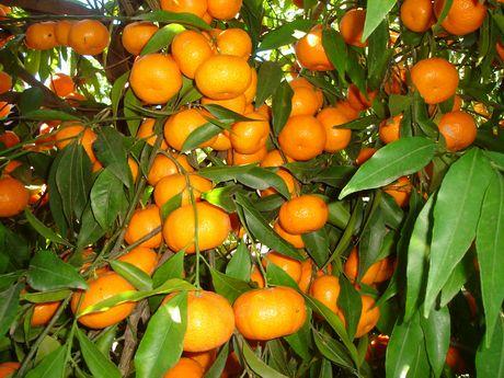 mandalate